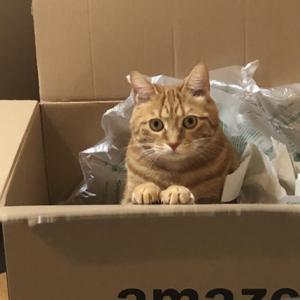 猫は段ボールが好き!でも、お部屋の見栄えが悪いのよね。