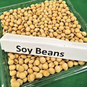 需給報告を受けて穀物は急落…来週(2020/07/13~)の動きに要注目