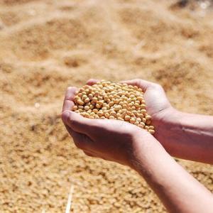 穀物は下げてからの戻し…来週(2020/07/20~)に方向感が明確になるのか…?