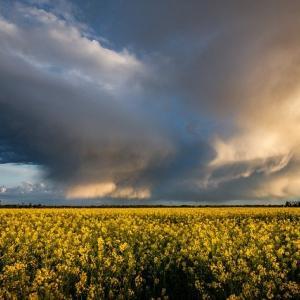 穀物の上昇は一息入れたか?原油と貴金属も上値の重い展開、来週(2020/10/19~)の展開は要注目