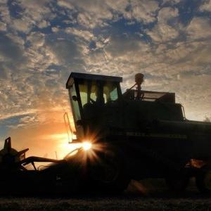 穀物に大陰線が出現…来週(2021/01/25~)以降に下げへと転換するのか要注目