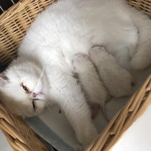 おむすびの赤ちゃん