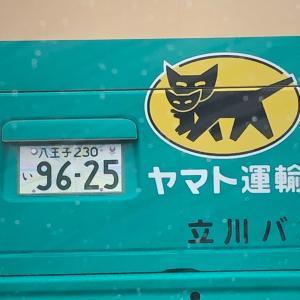 黒猫可愛い