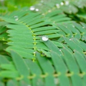 梅雨の季節も間近