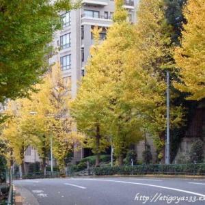黄色い葉で目の保養