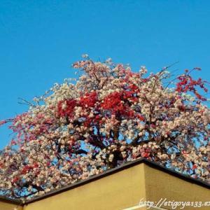 花の季節芽吹きの季節