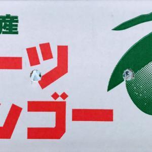 【絶賛受付中!】沖縄産100%無農薬マンゴー【絶賛の声多数♪】