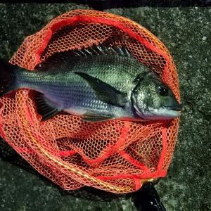 落とし込み釣り(目印)、今年の初釣りで短時間でツ抜けとええスタートが出来ました❗