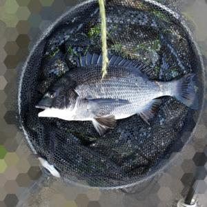 釣りに行くのに珍しく二度寝してしまい地合いに遅刻、散々な釣りになりました(笑)