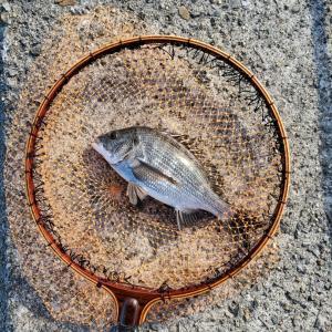 武庫一で落とし込み釣り(目印)