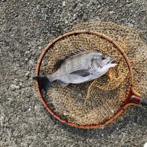 南港新波止に落とし込み釣りに行きました!