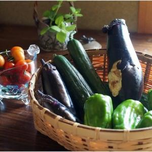 ウチの野菜は美味い!