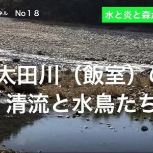 新よしG動画発信(通し018)『太田川水系(飯室)②』水鳥とめだか たち