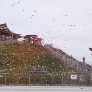 蕪島神社の再建工事完了