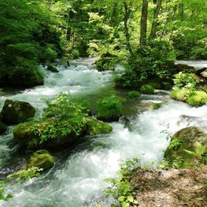 新緑の十和田湖渓流