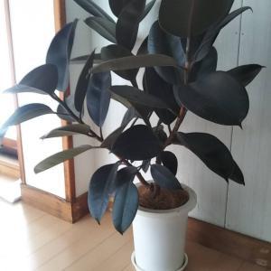 観葉植物置いてみました