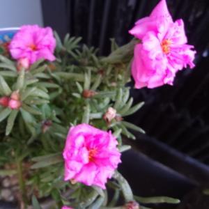 おじいちゃんが買ってきた花