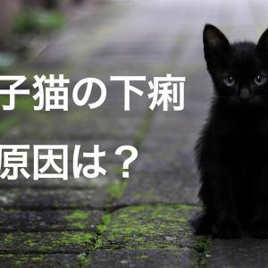 原因不明の子猫の下痢、もしかしたらフードが原因かも?