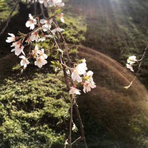 数霊53からのメッセージ&ワーク~お日様の光を浴びましょう~
