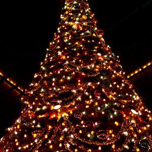 2012年12月 東京ディズニーランド(TDL) 48