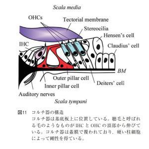ループ利尿薬による聴覚障害について