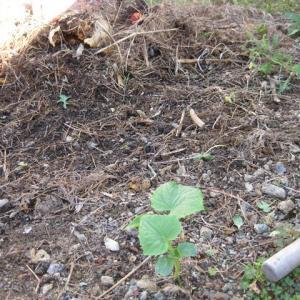 堆肥づくりのはずが・・・