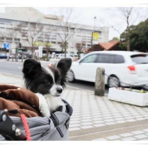 お正月旅行 2020年 ② 初めて倉敷・美観地区へ♬