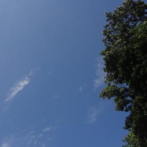 7月26日 久々の青空