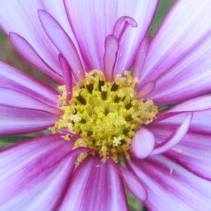 7月 美しい花に癒されて