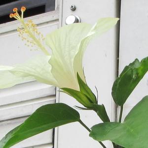 7月26日 介護とお花