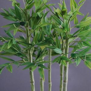 竹の盆栽で笹の葉さらさらの音と涼をお届け(アート盆栽/bonsai)