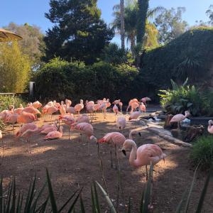 サンタバーバラの動物園へ