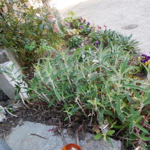 庭先にド○ゴンボール落ちてた。