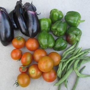野菜も復活してきました