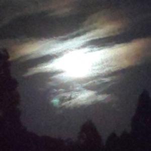 満月の光を浴びて…