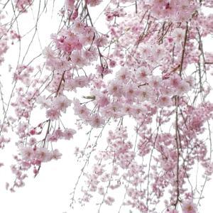 お花達に癒やされて至福の時を…