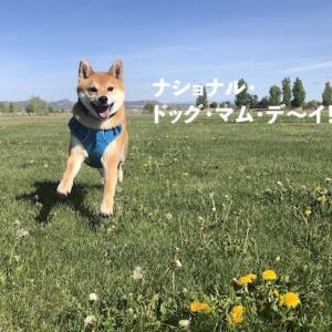 5/9は「National Dog Mom Day」