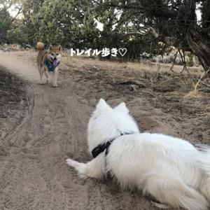 トレイル歩き+わんプロ