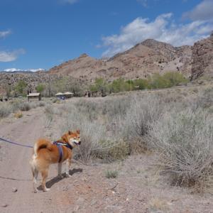 犬連れの旅