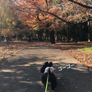 紅葉のお散歩
