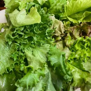 お野菜の季節♪