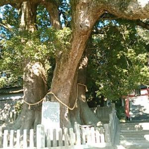 四国霊場第四番札所への遍路道を歩く
