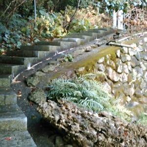 金剛福寺境内の奥にある石仏群