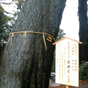 高倉観音の霊木を見た後、仁王門をくぐる