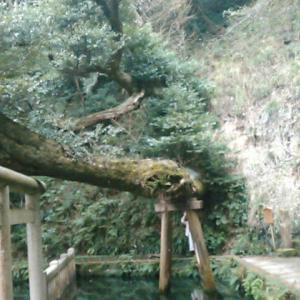 鹿島神宮の境内を出て家路につく