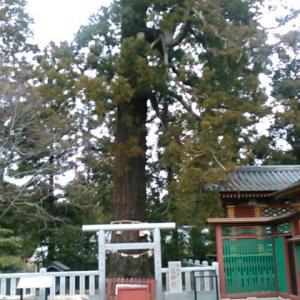 大杉神社とは