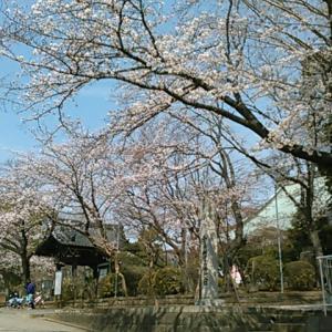 東国花の寺百ケ寺のひとつ、遊行寺