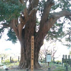 平成三十年三月下旬、安養院田代寺参詣