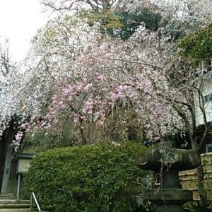 東国花の寺百ケ寺のひとつ、安国論寺