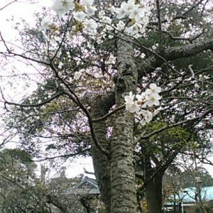 東国花の寺百ケ寺のひとつ、英勝寺